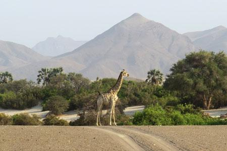 Giraffe in picturesque landscape